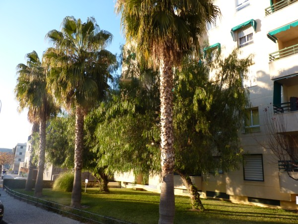 Lovely 2/3 Bedroom Apartment, central Antequera town.properties/33/02.jpeg